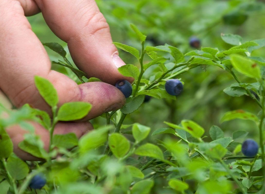bilberry scientific partners